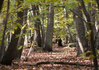 IMG_1174 Felthorpe Woods